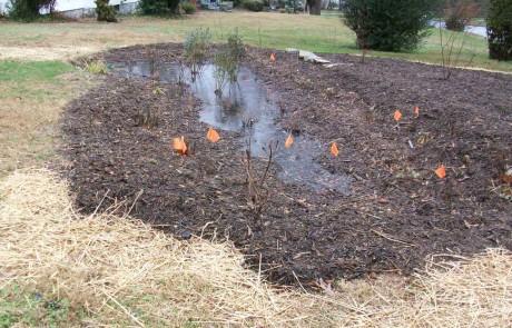 Rain Garden with Finish Work
